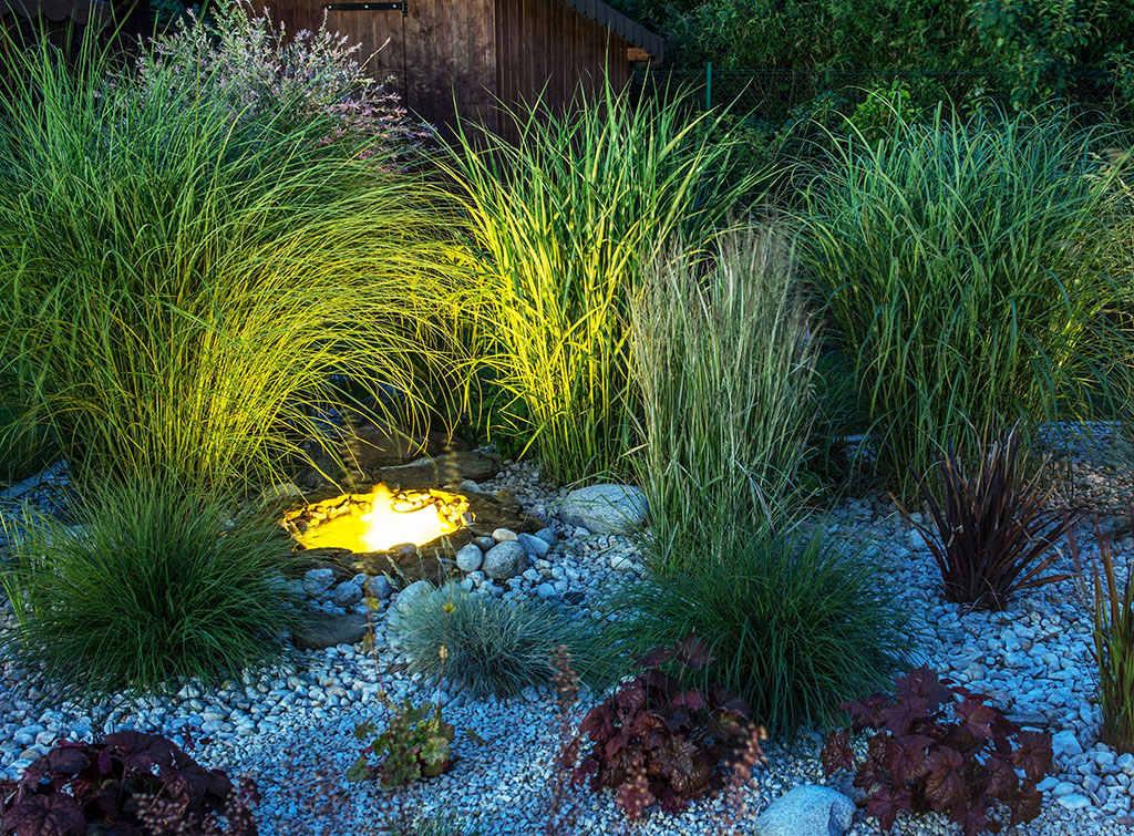 Uplighting Plants for Garden