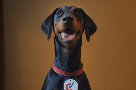 checkatrade dog