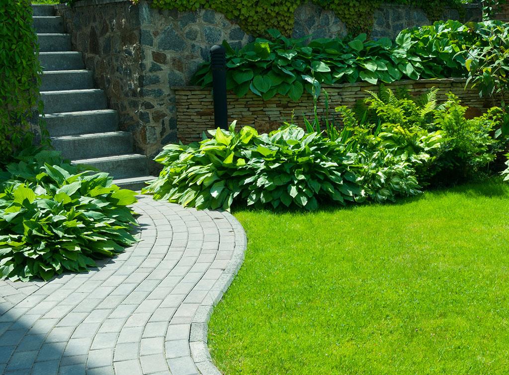 A neat, bright green garden