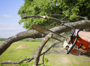 Maintain trees to prevent storm damage