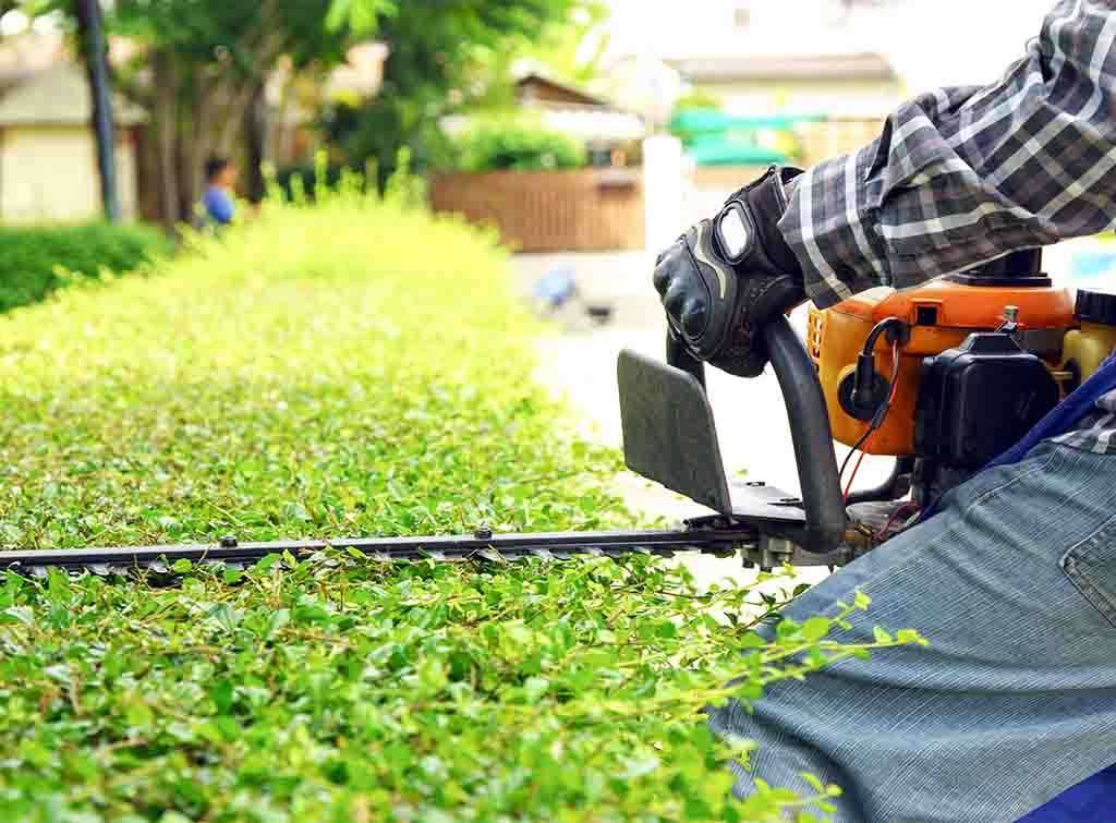 Hedge removal cost