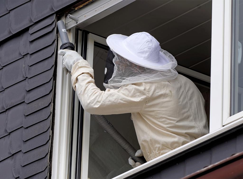 Hornet nest removal cost