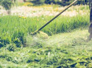 Strimming grass