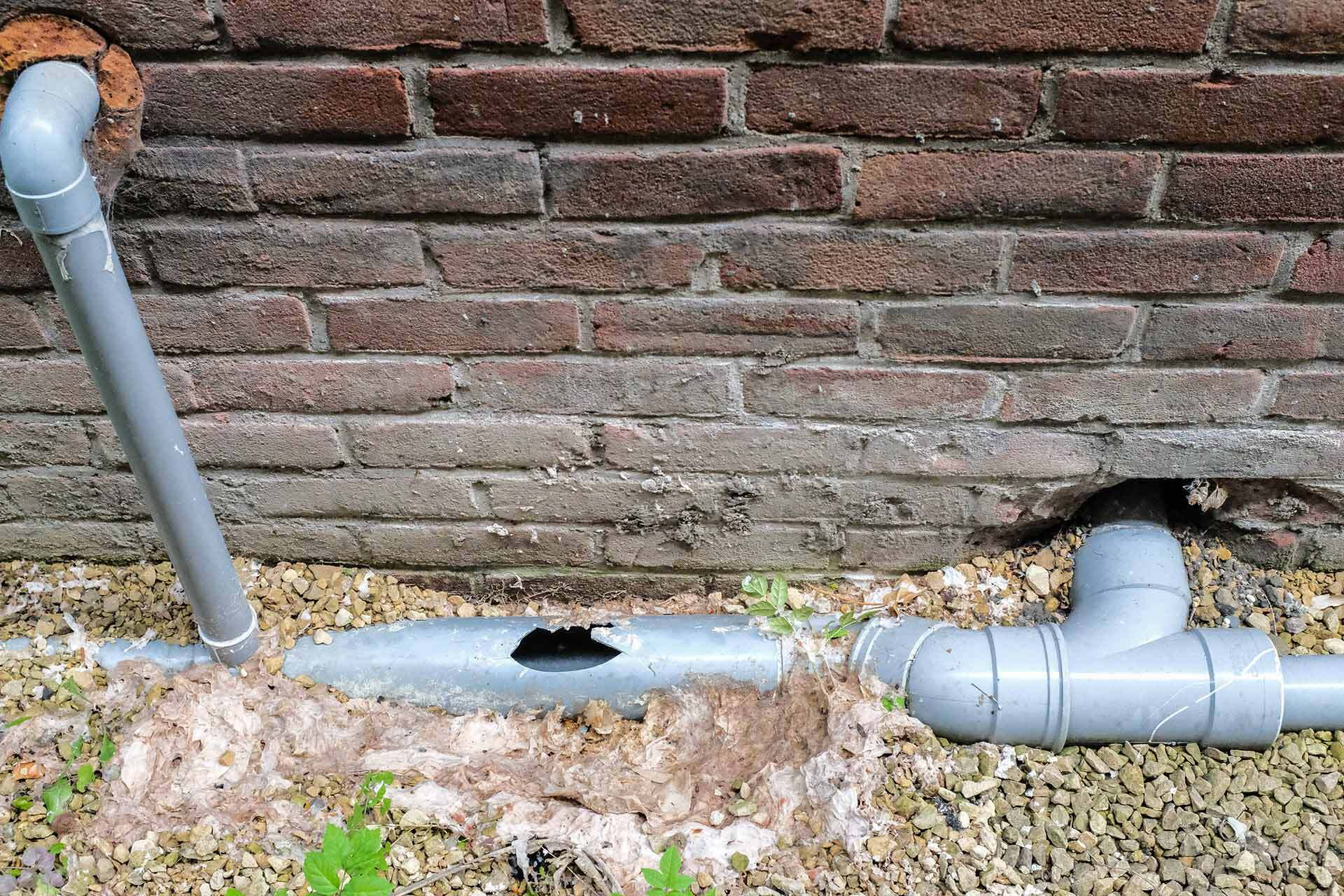 Drain repair cost showing broken sewer pipe - Featured