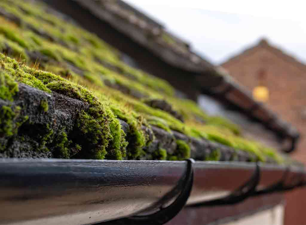 How Much Does Roof Cleaning Cost In 2021 Checkatrade