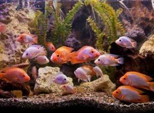 wall aquarium with tropical fish